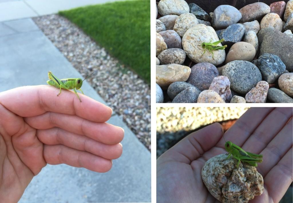 my grasshopper