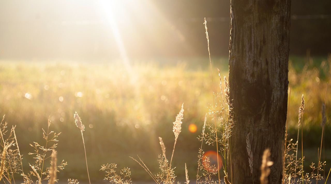 How to Live in Light of the Resurrection